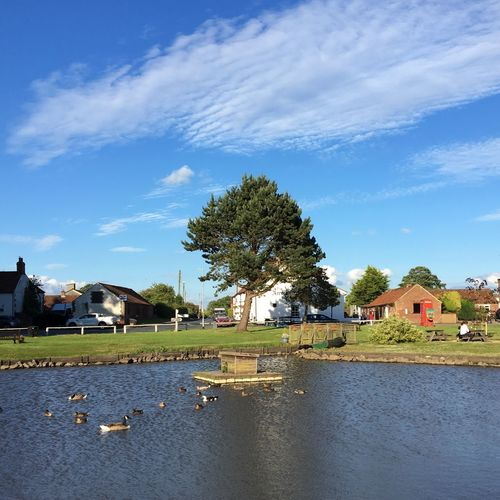 Village pond with ducks, Wold Newton, Yorkshire Sky Building Exterior Architecture Tree Cloud - Sky Built Structure Day Water Outdoors Blue No People Nature Lake Animal Themes Bird Beauty In Nature Village Village View Village Green Pond Ducks Sunny Day Rural Scene