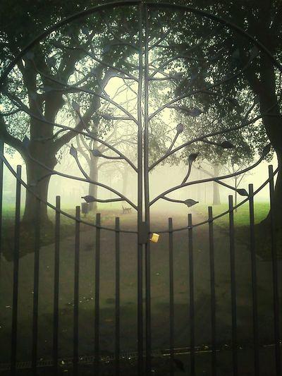 misty tree gates Walking To Work