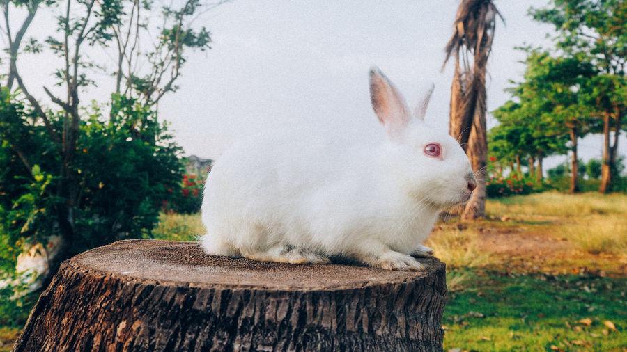 Close-up of rabbit sitting on tree stump
