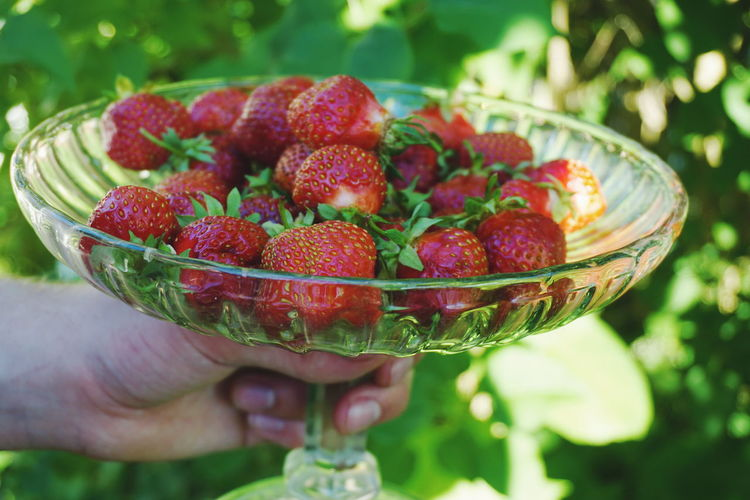 strawberries Strawberry Strawberries Red Garden Dessert Red Color Berry Berry Fruit Healthy Eating Healthy Food Summer Human Hand Fruit Red Raspberry Bowl Strawberry Close-up Food And Drink Sweet Food Harvesting