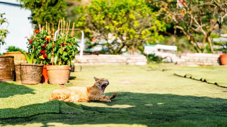 Cat relaxing in yard