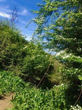 Fastest 1K ⏱03,39⏱ Improvement Runningwild NatureTherapy