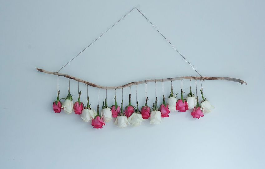 Roses Flowers Flower Hanging Fragility Freshness Pink White Roses Indoors  Decoration Day White Background No People Flower Head Pink Roses Decor Beautiful Popular Photos Check This Out EyeEm EyeEm Best Shots EyeEm Gallery EyeEm Nature Lover Photooftheday Photography