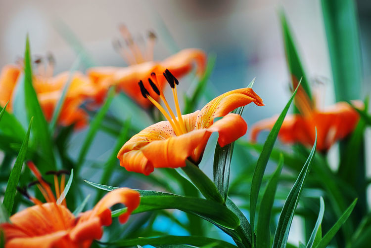 Neighboor flowers Best  Bestoftheday EyeEm Best Shots Beauty In Nature Sunlight Nature Photography Flower Plant Orange Detail Macro Nature Beautiful