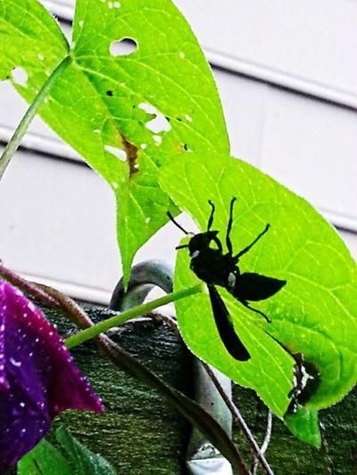 Wasp hiding