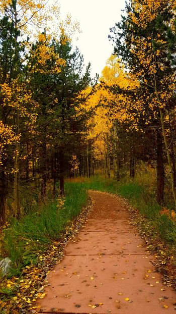 Tree Autumn Nature Beauty In Nature Growth Outdoors No People Change Day Leaf Forest Tree Nature Beauty In Nature Autumn Leaves Maroonbells Autumn Colorful Green Color