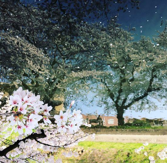 Flowers blooming on tree against sky