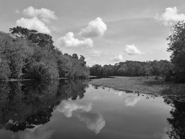 Forest Photography Blue Spring Florida Mirror Reflection Mirroring In Water Mirror Lake Mirrored Reflection Black Water Blue Sky Mirror Water Sky Photography Sky Reflection In The Water Sky Reflection In Water Sky Reflections On Water The Week On EyeEm Been There. Lost In The Landscape