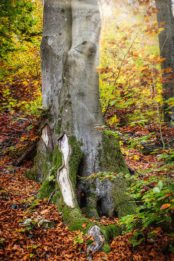 Moss growing on tree trunk during autumn