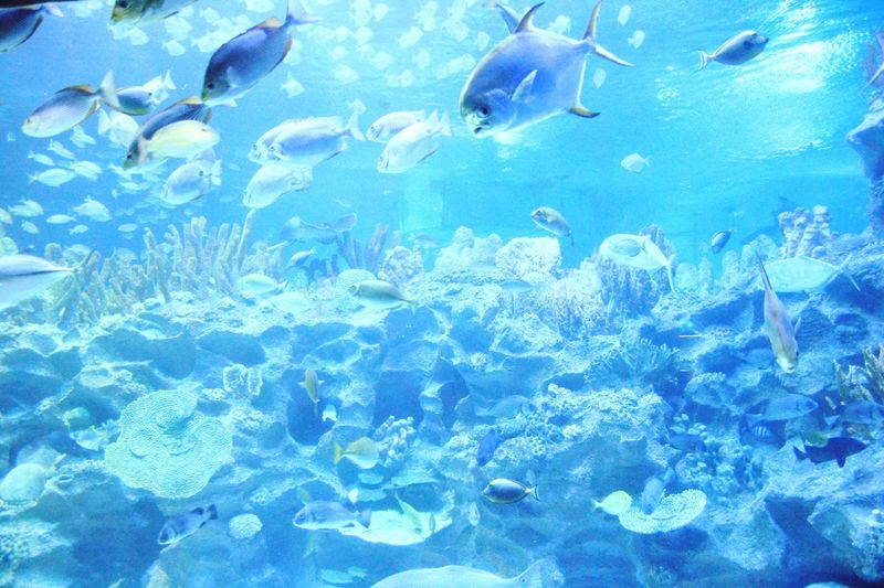 People Together Aquarium Aquatic Aquaria KlccAs Beautiful As It Gets like Wallpaper Relax Time  Fish Fish Tank Enjoyable Moment Live Wallpaper Backlight Coral Hidden Gems  Live For The Story