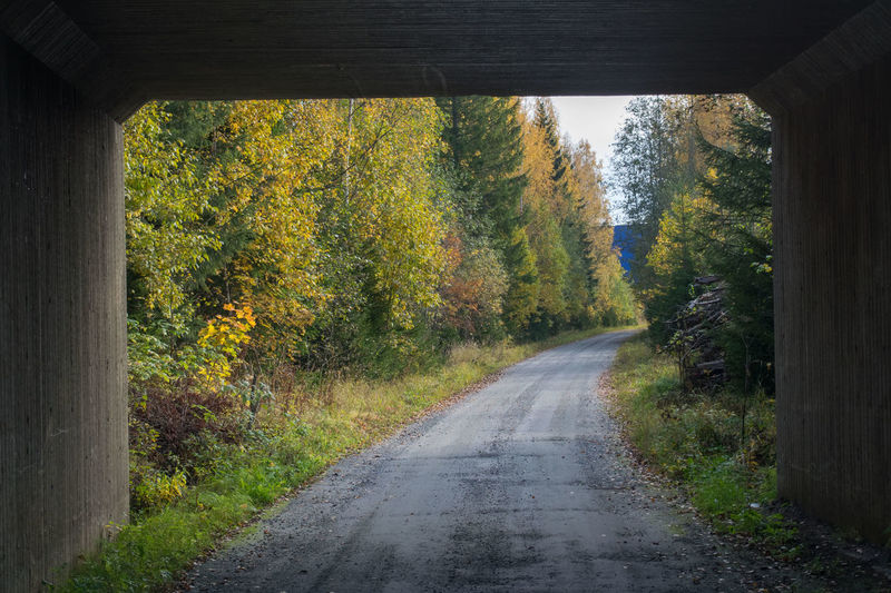 Autumn Beauty In Nature Day Leaf Nature No People Outdoors Road Scenics The Way Forward Tranquil Scene Tranquility Tree Tunnel Food Stories