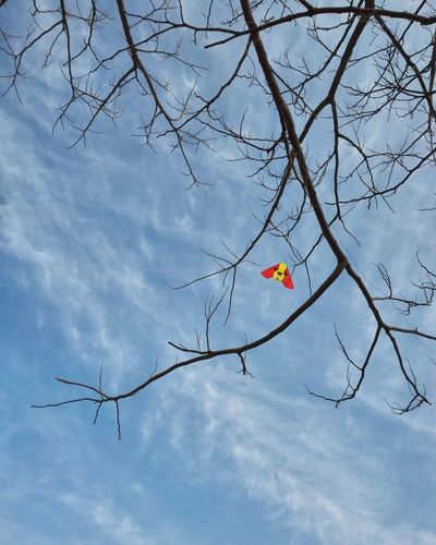 The Spring Is Coming Flying A Kite