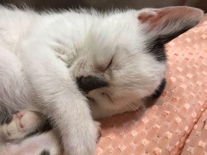 EyeEm Selects Pets Mammal Animal Themes Animal Domestic Cat One Animal Domestic Animals Feline Domestic Cat Relaxation Eyes Closed  Vertebrate Sleeping Close-up Indoors  Resting Animal Body Part Body Part Lying Down