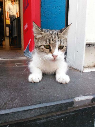 Cat♡ Cats 🐱