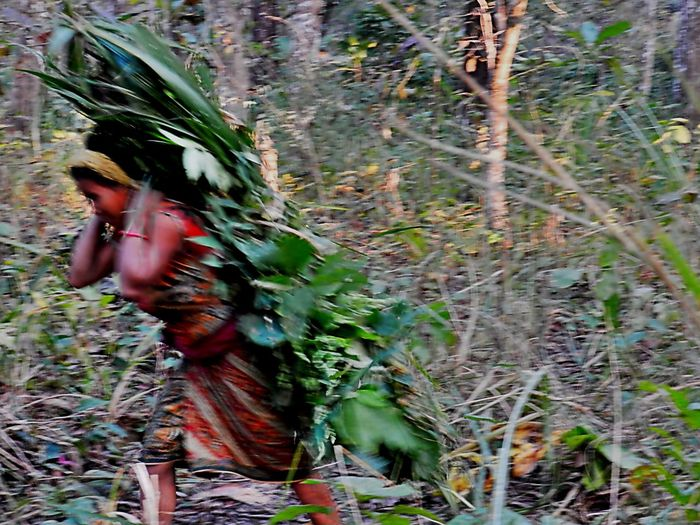 Beauty In Nature Carrying Heavy Stuff Earning For Living Gathering Plants Green Color Growth Hard At Work Heavy Metal Hurry In The Woods Outdoors Photography In Motion Piggyback Plant Running Sarong Strong Tree Woods