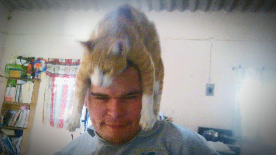 Catlikeahat Mycat Meow Trollcat