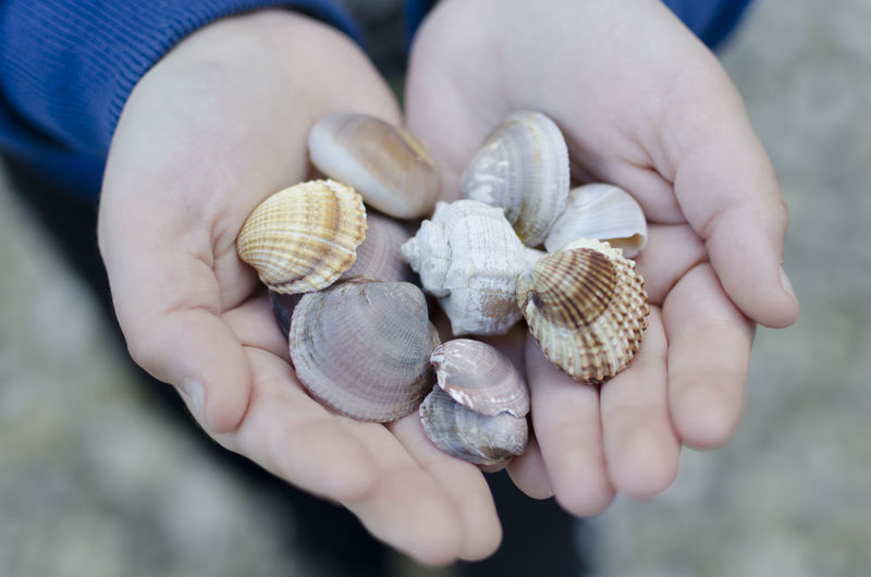 Midsection Of Person Holding Seashells