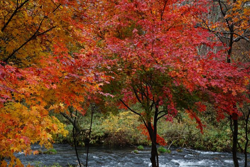 Leaf River Getting Inspired Tree Plant Autumn Change Growth Nature Tranquility Branch Red Autumn Collection
