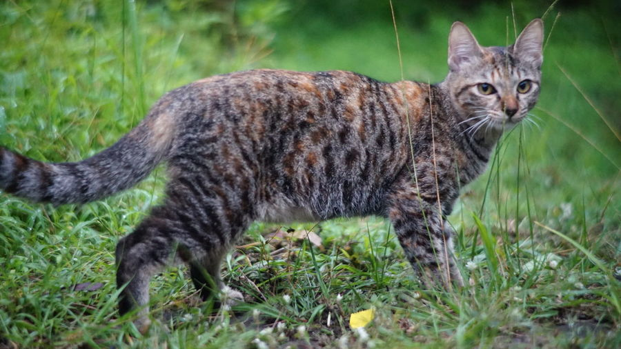 #cat #nature