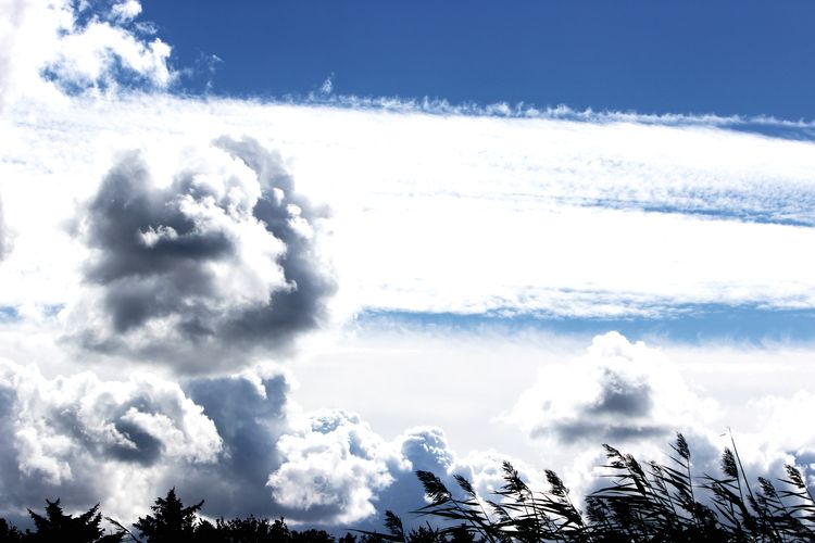 Cloud - Sky Beauty In Nature Sky Scenics - Nature Day Nature Plant Tranquility Tree Tranquil Scene No People Non-urban Scene Outdoors Environment Low Angle View Sunlight Power In Nature