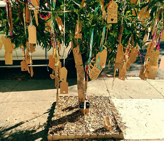 Sunlight Tree Trunk Plant Outdoors Growth Inspirational Wish Tree Tree Wishes Wishing Wishful Wishful Thinking San Francisco California Enjoy The New Normal