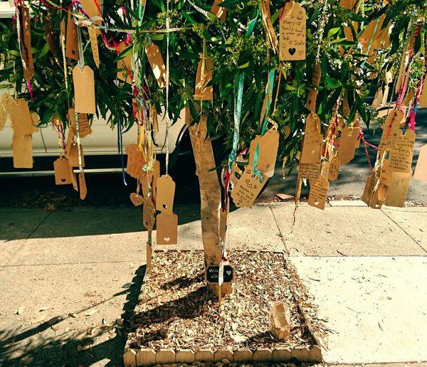 Sunlight Tree Trunk Plant Outdoors Growth Inspirational Wish Tree Tree Wishes Wishing Wishful Wishful Thinking San Francisco California Enjoy The New Normal