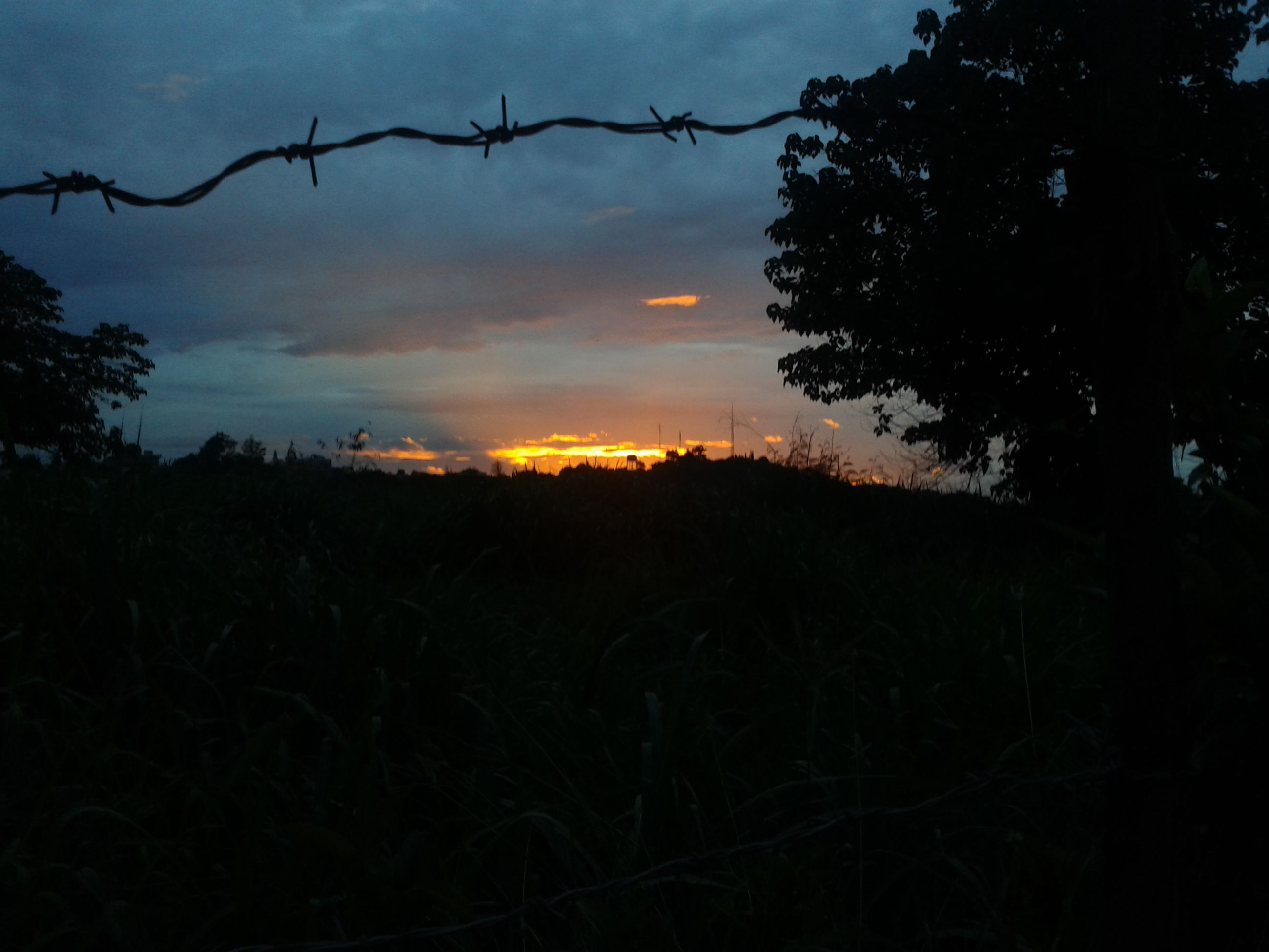 sunset, silhouette, sky, tranquility, tranquil scene, scenics, beauty in nature, nature, tree, field, cloud - sky, landscape, growth, dusk, plant, orange color, cloud, idyllic, dark, outdoors