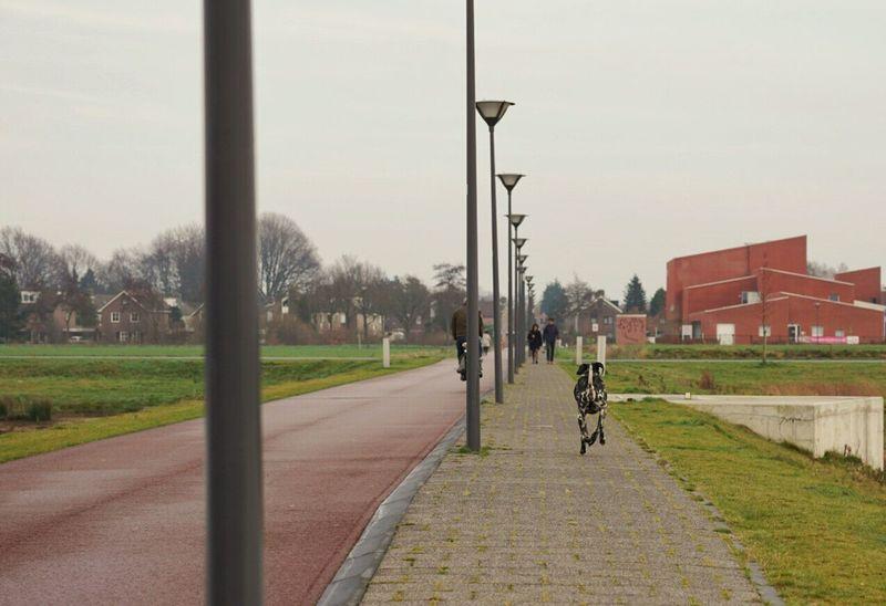 Dog Running Bike Holland Bike Lane