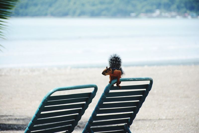 Squirrel on deck chair at beach against sea