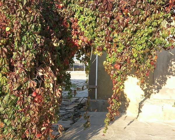 Leafage Leaves Autumn October Foliage Feuilles Feuillage Automne осень листва