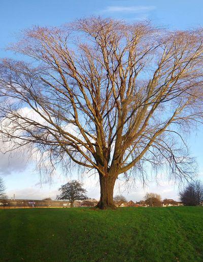 Gorton Manchester Tree Park