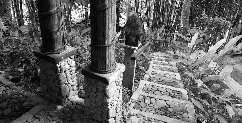 EyeEmNewHere Rural Lifestyle Stone Steps Summer In The City Beauty In Nature Day Escape From The City Forest Growth High Angle View Janda Baik Nature No People Outdoors Plant Rural Life Shelter Staircase Tranquility Tree Trunk Village Life Weekend Getaway Wood - Material Wood Structure Wooden Beams