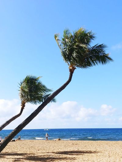 Low angle view of bending palm trees on beach against clear blue sky
