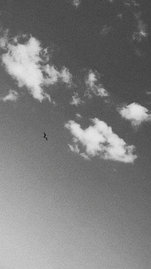 b&w Cloud - Sky Flying