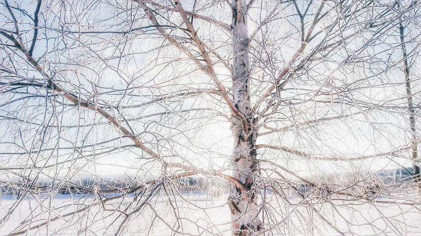 オリンピック終わったねー。そだねー。 朝日 朝陽 Sunrise Winter Winter Wonderland Snow ❄ Snow Nature Nature Photography 田舎暮らし Hokkaido 北海道 Landscape Winter Landscape Trees Tree Black_chica1802 雪 自然 冬 Naturephotography Snowphotography Winterlandscape EyeEmNewHere