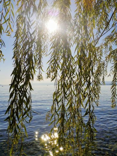 Sunlight streaming through tree against sea on sunny day