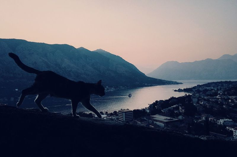 One Animal Silhouette Animal Themes Sunset No People Mountain Mammal Nature Outdoors Water Sea Sky Beauty In Nature Clear Sky Domestic Animals Day