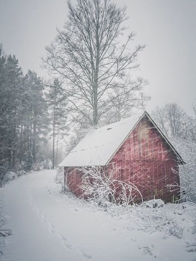 A Bit Of Sweden   Nature Winter Snow Nature Photography Naturelovers Nature_collection EyeEm Nature Lover Eye4photography  EyeEm Gallery EyeEm Best Shots Sweden Nature_perfection Snow ❄ Snowing Cold Temperature Tree Building Exterior Built Structure House No People Architecture Outdoors Bare Tree Day Nature Sky