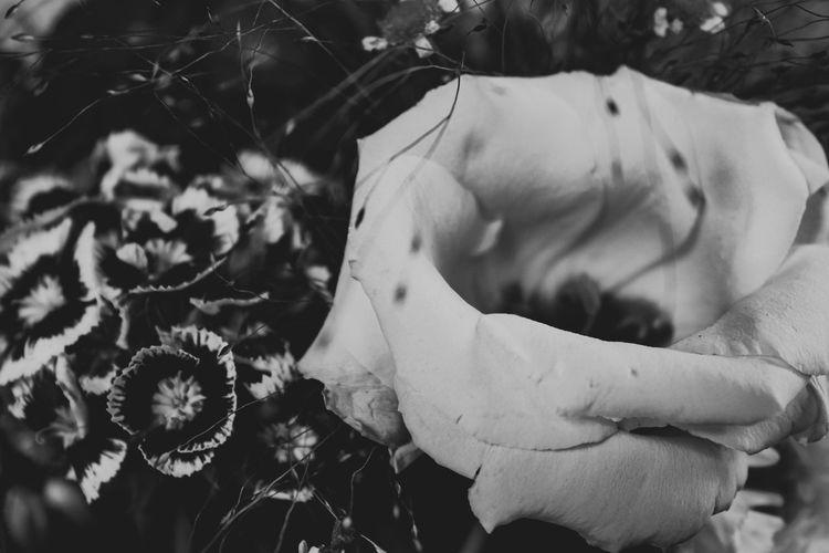 Bouquet, August