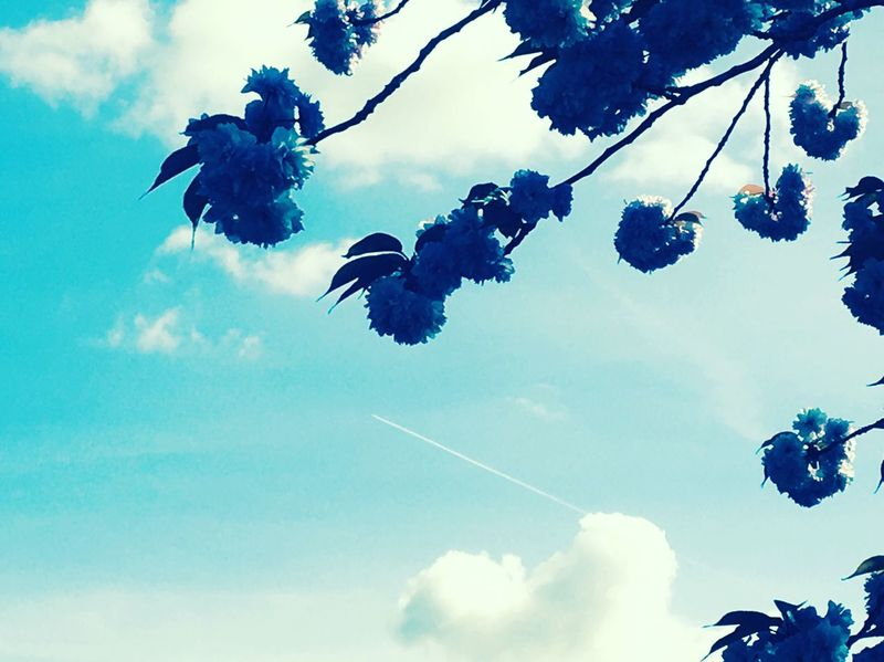 Day three of photography challenge- coulds ☺️ Sky Low Angle View Cloud - Sky Blue Nature Flying No People Silhouette Day Outdoors Animal Themes Bird Beauty In Nature Tree