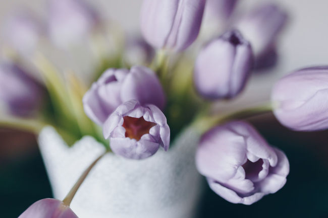 Double Exposure Tulips Beauty In Nature Close-up Day Flower Flower Bouquet  Flower Head Flowers On Table Fragility Freshness Growth Nature No People Outdoors Petal Plant Selective Focus Tulip Tulips Flowers Tulips🌷