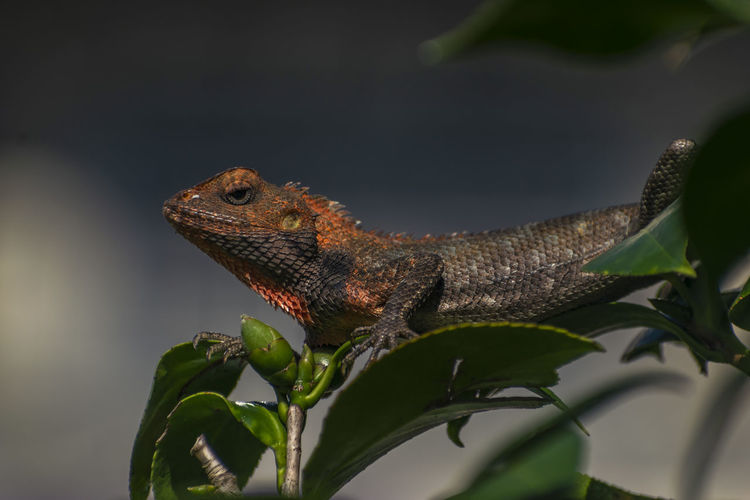 Close-up of a lizard on branch