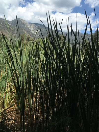 Taking A Walk Exploring Daytime Beautiful Day Beauty In Nature Enjoying Nature No Filter, No Edit, Just Photography Mountains Blue Sky Clouds Tall Grass Getting Lost Exploring Nature