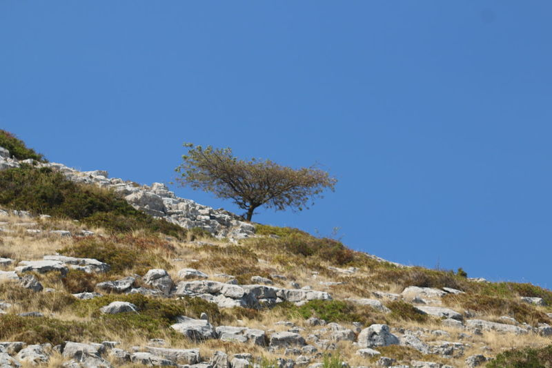 Small tree at the rocky island Clear Sky Nature Trees And Nature Tree Landscape Beauty In Nature Tree Growth Close-up 3XSPUnity Taking Photos Rocky Landscape Rocky Coast Kornati Islads