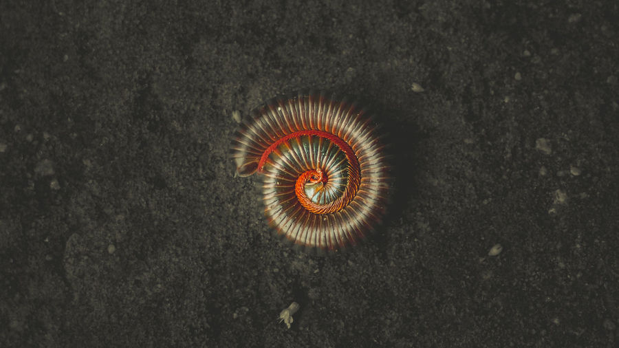 Directly above shot of spiral centipede on field