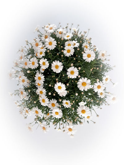 """I want daisies"