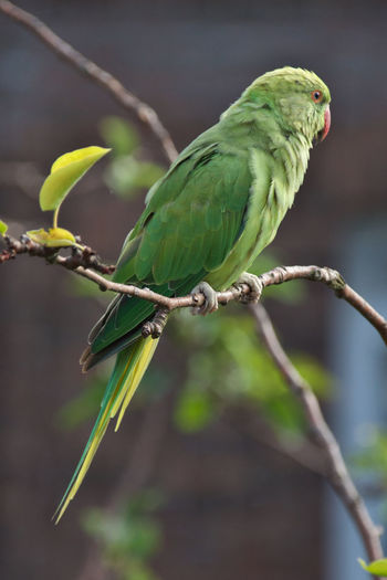 Animal Animal Themes Bird Close-up Focus On Foreground Green Color Nature Perching Plant Tree