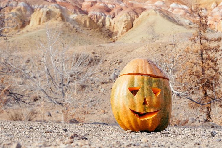 Anthropomorphic Face Autumn Day Halloween Jack O' Lantern Nature No People Outdoors Pumpkin