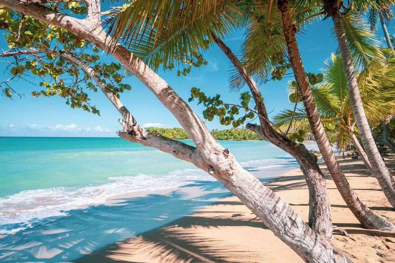 Playa Bonita - schöner Strand! Water Sea Land Beach Tree Beauty In Nature Tranquility Nature Sky Horizon Over Water No People Sand Wave Outdoors Sunlight Day Horizon Tranquil Scene