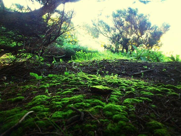 Nature Green Mountain Moss